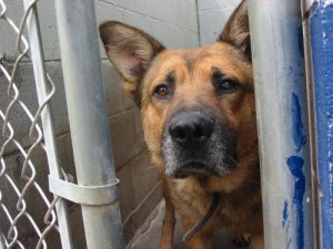 KLINK was KILLED at CHEROKEE COUNTY ANIMAL SHELTER ...GAFFNEY SOUTH CAROLINA USA in 2005.