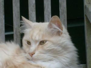 Alexandra's cat is an Ambassador :)