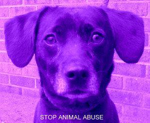 Puppy Doe Ambassador - Bill Catalioto. Willie and I are against animal abuse.