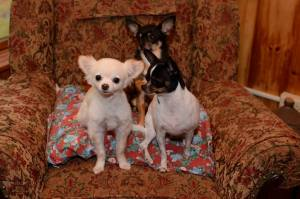Barry A - Our family: Taco Lee, Chili-Bob, and Milo Shamus Maloney; working toward a culture change on behalf of animals
