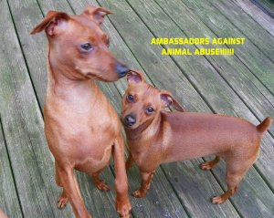 Marlene, Spartan & Brutus are Ambassadors Against Animal Abuse!!!!