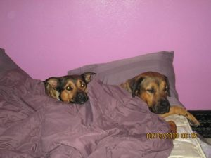 Tamara's - Cocoa and Zero, Rottweiler's, are ambassadors of Puppy Doe!